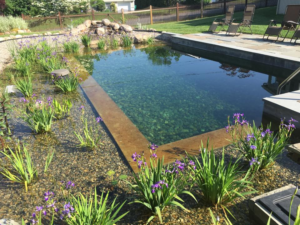 CandideContractor.com - Natural Swimming Pools